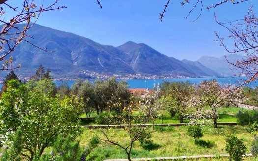 kotor development land